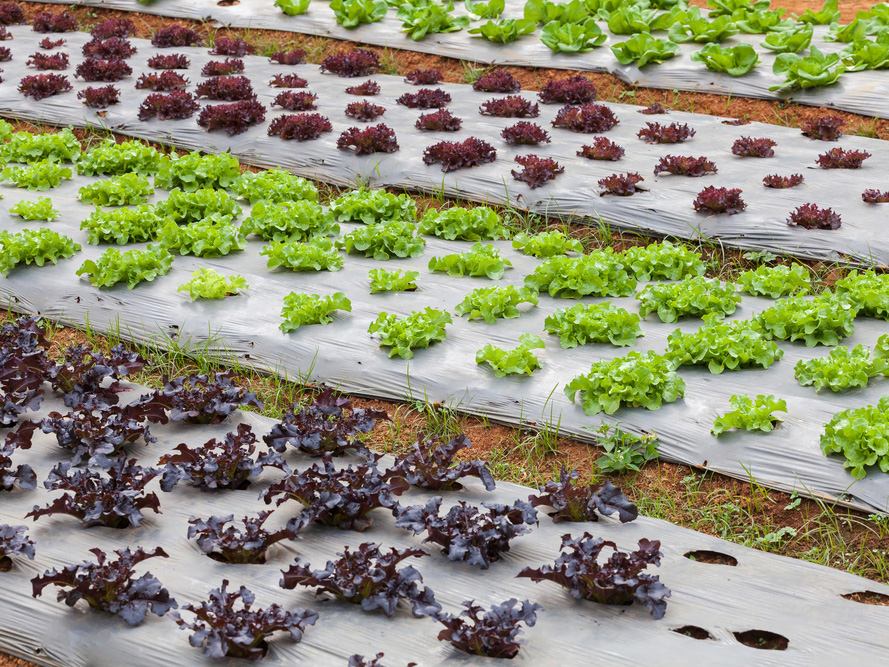 EcoPoly Solutions Oxo-Biodegradable Plastics | George Koukis